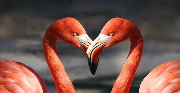 flamingo-600205_1280